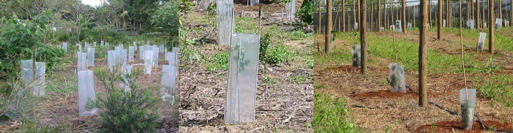 Clear Propatube Grow Tube