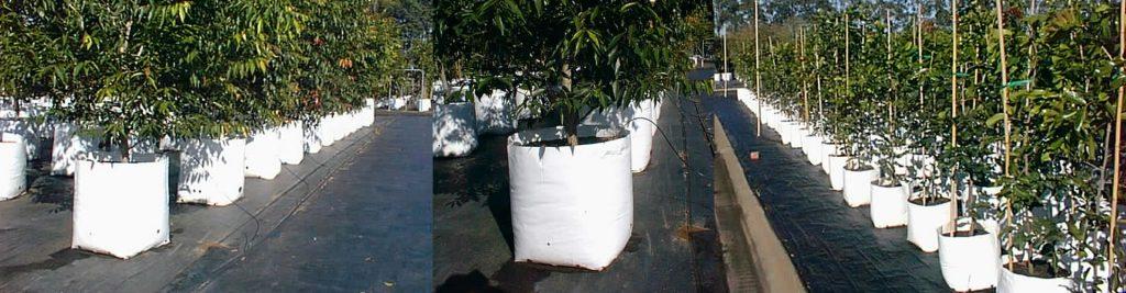 White Planter Bags